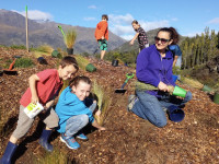 Wakatipu Reforestation Trust feature